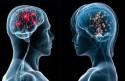 Apa Beda Kerja Otak Pria dan Wanita?